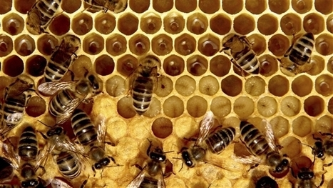 Pesticides et abeilles: des groupes environnementalistes poursuivent une agence fédérale   Chronique d'un pays où il ne se passe rien... ou presque !   Scoop.it