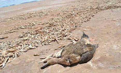 El Poopó desaparece, el segundo lago más grande de Bolivia ha llegado a su fin | Misc | Scoop.it