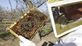 America is one bad winter away from a food disaster, thanks to dying bees | Messenger for mother Earth | Scoop.it