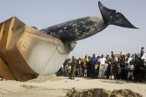 A Brief History of Exploding Whales | Realestatedreams | Scoop.it