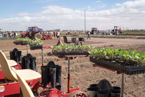 Yuma Cancels Long-Running Lettuce Days Food Festival | CALS in the News | Scoop.it