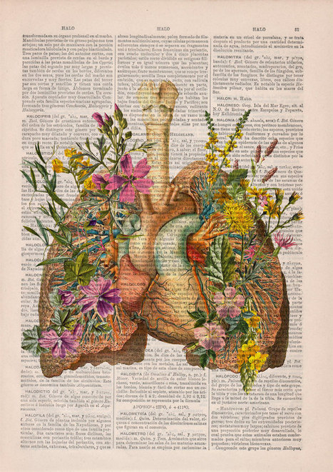 #Beautiful #Floral #Anatomy #Illustrations Give New Life to Discarded #Pages of Old #Books #text #art | Luby Art | Scoop.it