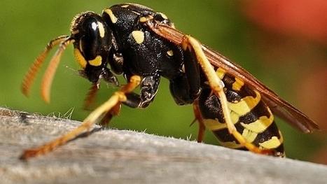 Guêpes et tiques profitent du beau temps | EntomoNews | Scoop.it
