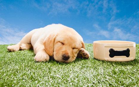 La première nuit du chien à la maison | Edenzo - L'information et l'actualité des chiens et chats | Edenzo.com | Scoop.it