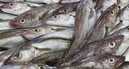 Etiquetage du poisson : peu de fraudes en France | agro-media.fr | Actualité de l'Industrie Agroalimentaire | agro-media.fr | Scoop.it
