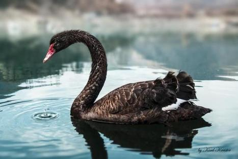 Nuclear war, the black swan we can never see | Sustain Our Earth | Scoop.it