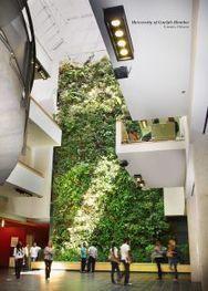 Les plantes pour ASSAINIR l'eau, l'air et les sols | URBANmedias | Scoop.it
