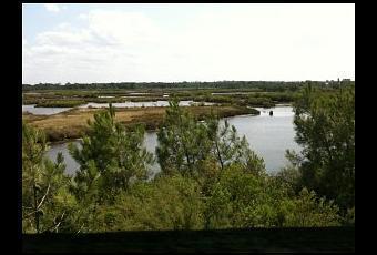 Nos vacances sur le Bassin d'Arcachon ! (3e partie) | Le Bassin d'Arcachon | Scoop.it