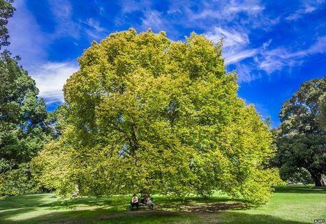 The Melbourne treemail phenomenon - BBC News | PARATEMPOS | Scoop.it