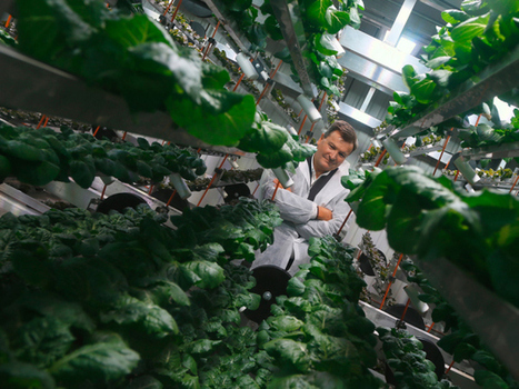 Where 'Star Trek meets farming:' Montreal cubic farmer aims to grow 500 heads of lettuce a year in a single square foot | Innovation+ | Scoop.it
