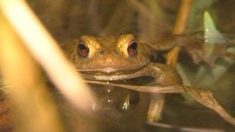 Contrebande : le taxi français voulait introduire des grenouilles en Suisse   Mais n'importe quoi !   Scoop.it