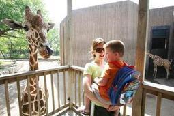 Zoo's killing of giraffe wouldn't happen here, Sedgwick County Zoo ... | Zoos should not exist | Scoop.it