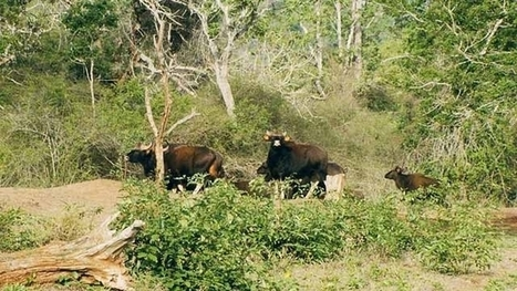 Bandipur National Park | travel | Scoop.it