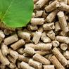 Biomasse et Energies Renouvelables