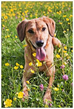 How To Make A Dog Friendly Garden | Garden and Outdoor Australia 2 | Scoop.it