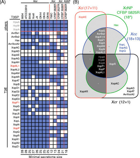 BMC Genomics: Genomics and transcriptomics of Xanthomonas campestris species challenge the concept of core type III effectome (2015) | Effectors and Plant Immunity | Scoop.it