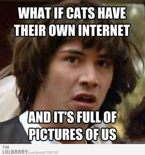 Cats Get Their Own Social Network | free weezy :))) | Scoop.it
