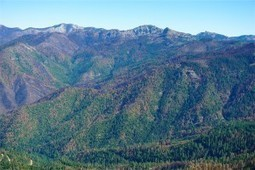 Westside Fire Recovery Project a Hot Mess | GarryRogers Biosphere News | Scoop.it