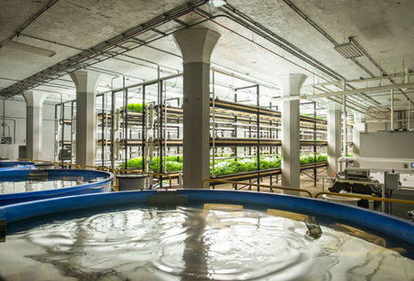 Urban Organics fish farm expanding in old St. Paul brewery | Aquaponics in Action | Scoop.it
