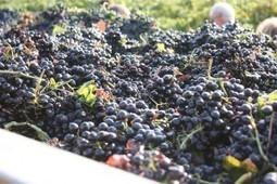 Bientôt du vin français à partir de raisins portugais, espagnols et mêmegéorgiens | Wine and the City - www.wineandthecity.fr | Scoop.it