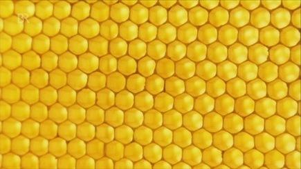 Bienen: Summende Nutztiere | Wissen | Themen | BR.de | Maiselbiene | Scoop.it