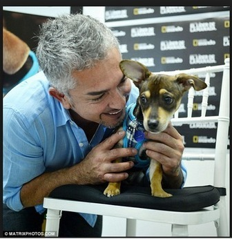 The Damage of the Dog Whisperer: A scientific critique of Cesar Millan's theories and training methods. | a lifetime online | Scoop.it