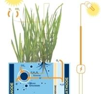Raíces vegetales y bacterias: una inesperada fuente de electricidad | Cambio Climatico | Scoop.it