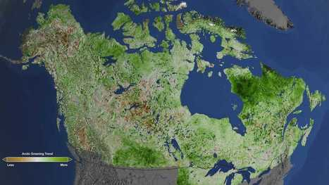Thanks to climate change, the Arctic is turning green | Sustain Our Earth | Scoop.it