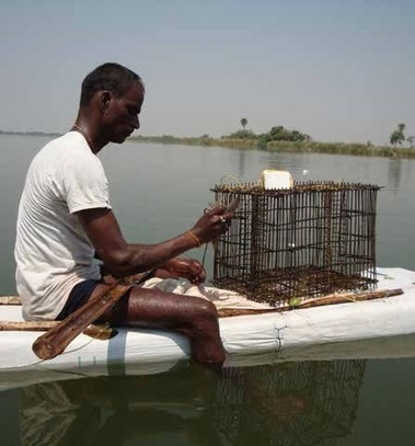 The Aquaculturists: 25/06/2015: Farming the reservoirs: Indigenous techniques for freshwater prawn catching in the reservoirs of Telangana, India | Global Aquaculture News & Events | Scoop.it