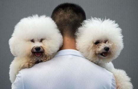 Les chiens n'aiment pas les gens sans égard pour leurs maîtres | animaux | Scoop.it