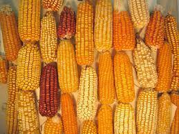 Typical Crops | Honduras, Russell Hooks | Scoop.it