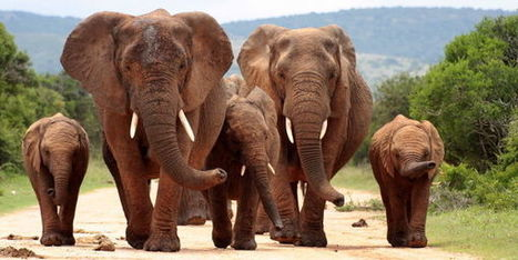 Tell Congress To Fight Wildlife Trafficking - The Petition Site | Conservation | Scoop.it