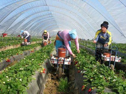 L'agriculture biologique prise au piège de la grande distribution | Pour une agriculture et une alimentation respectueuses des hommes et de l'environnement | Scoop.it