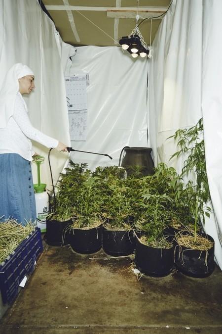 En Californie, un culte qui fleure le cannabis | Les actus de la semaine | Scoop.it