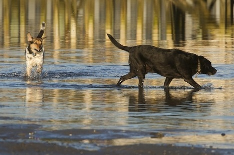 Scarborough voters overturn hotly debated leash law  | The Portland Press Herald / Maine Sunday Telegram | Where can I take my dog to the beach? | Scoop.it