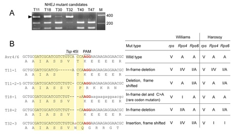 bioRxiv: Efficient Disruption and Replacement of an Effector Gene in the Oomycete Phytophthora sojae using CRISPR/Cas9 (2015) | Plants and Microbes | Scoop.it