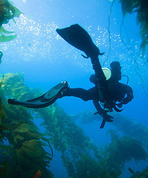 Divers must heed risks - Marlborough Express | ScubaObsessed | Scoop.it