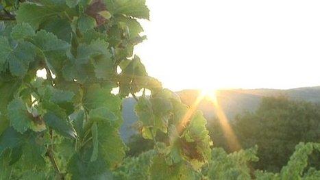 L'agriculture pèse près de 3 milliards d'euros en Languedoc-Roussillon | Chimie verte et agroécologie | Scoop.it