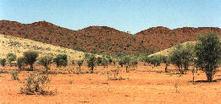 peinture aborigene | Les aborigènes | Scoop.it