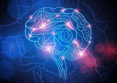 The Mystery of the Brain: Findings of Modern Neuroscience   Global Brain   Scoop.it