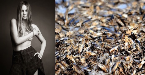 Shailene Woodley, a Doctor and an Entrepreneur All Have This Gross Thing in Common | Entomophagy: Edible Insects and the Future of Food | Scoop.it