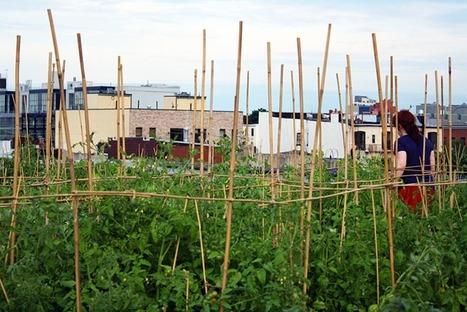 Quatre idées pour mettre un peu de campagne en ville | biodiversité en milieu urbain | Scoop.it