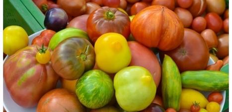 La tomate, un concentré de pigments anti-cancer   Environnement, Gestion durable, Zéro déchet, RSE   Scoop.it