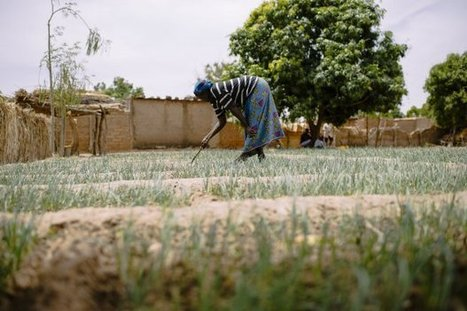How to better support women wanting to adopt climate-smart agriculture practices? | CCAFS: CGIAR research program on Climate Change, Agriculture and Food Security | Climate Smart Agriculture | Scoop.it