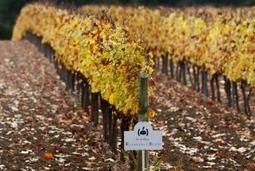 Non chiamatemi Cava: scoppia la guerra tra bollicine catalane | Wine in Tuscany | Scoop.it