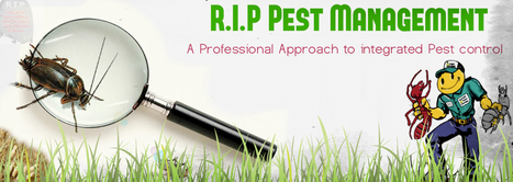 Use the Method of Organic Pest Control to Control and Eliminate Pests | R.I.P. Pest Management | Pest Exterminator Northern Beaches | Scoop.it