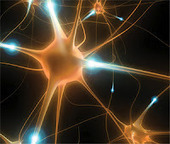 Identifying Alzheimer's Disease | Advances in Medicine | Penn ... | Research project: history of medicine | Scoop.it