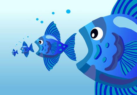Hay que seleccionar el tipo de pescado para reducir el riesgo de ingerir mercurio | Salud Natural | Scoop.it