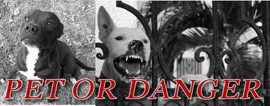 Pit Bulls: Propaganda or Killing Machine?   Personal Injury Law   Scoop.it