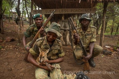Malawi strengthens anti-poaching laws | Rhino Poaching & Wildlife Crime | Scoop.it